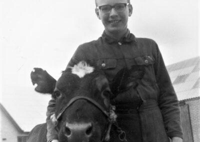 Anton Raundahl som dreng med en kalv af kvægracen SDM