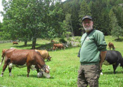 Anton Raundahl i Frankrig med kvægracerne Abondance og Tarantaise - samt en sort krydsning