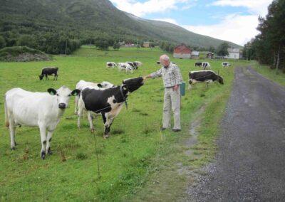 Anton Raundahl i Norge med kvægracen Sidet trønder- og nordlandsfe